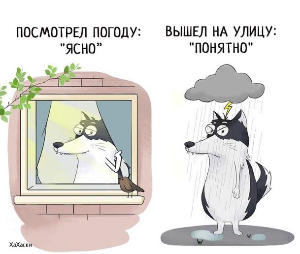 """""""Хаски - это ты!"""" 100% юмора, где каждый узнает свою жизнь. + История о настоящем хаски и котятах! рис 13"""