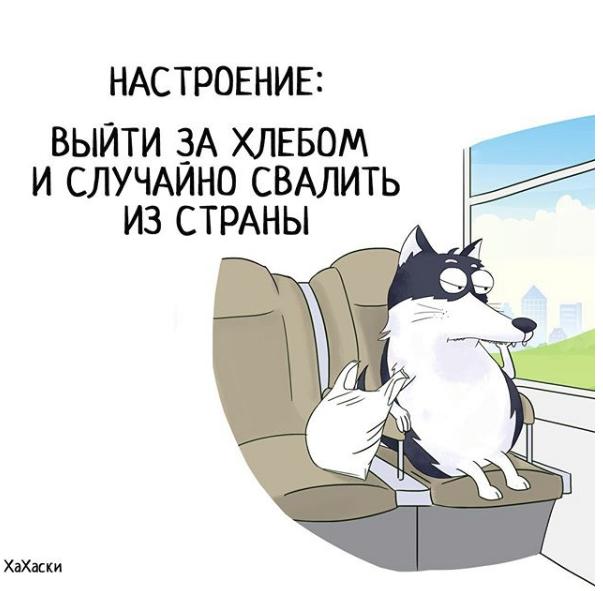 """""""Хаски - это ты!"""" 100% юмора, где каждый узнает свою жизнь. + История о настоящем хаски и котятах! рис 5"""