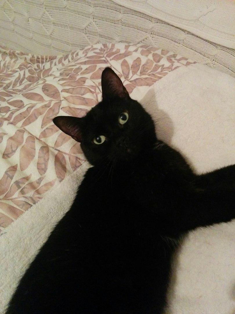 черный кот рис 2