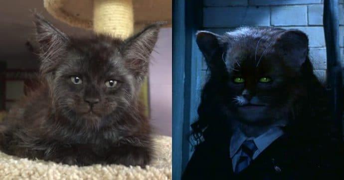 Кот с человеческим лицом и Гермиона