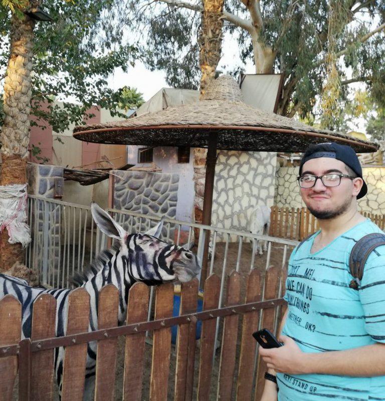 """""""Ух ты, зебра полиняла!"""" Курортный зоопарк раскрасил ослов, чтобы люди приняли их за экзотику..."""