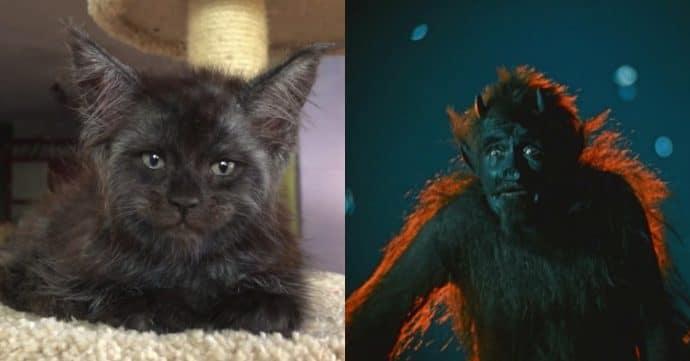 Кот с человеческим лицом и Черт