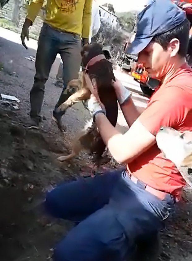 собака рис 3