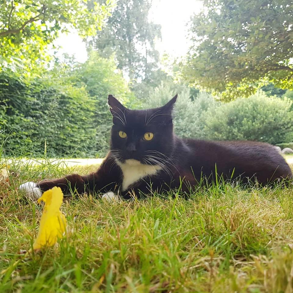 Кошка нежно прижимала к себе раненого бельчонка... История 3-х усатых друзей, полная счастливой любви! рис 8