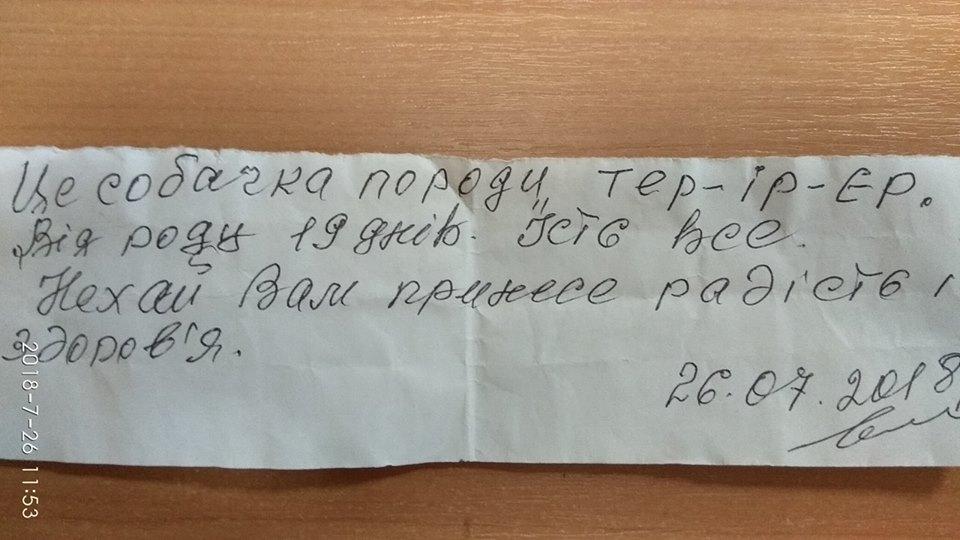 Щенок несуществующей породы был спрятан на лестнице. К нему прилагалось письмо! рис 2