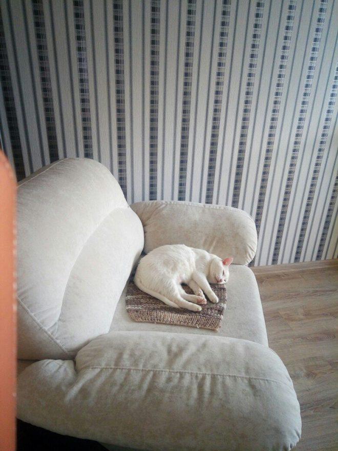 белый кот рис 2