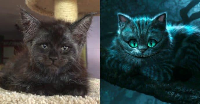 Кот с человеческим лицом и Чеширский Кот