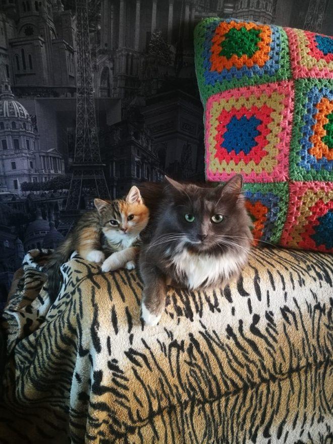котенок и кошка
