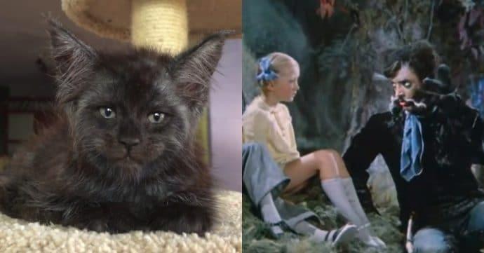 Кот с человеческим лицом и Кот Баюн