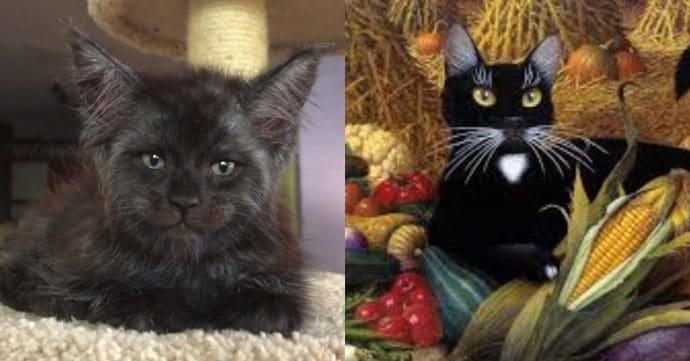 Кот с человеческим лицом и Кот со старых картин