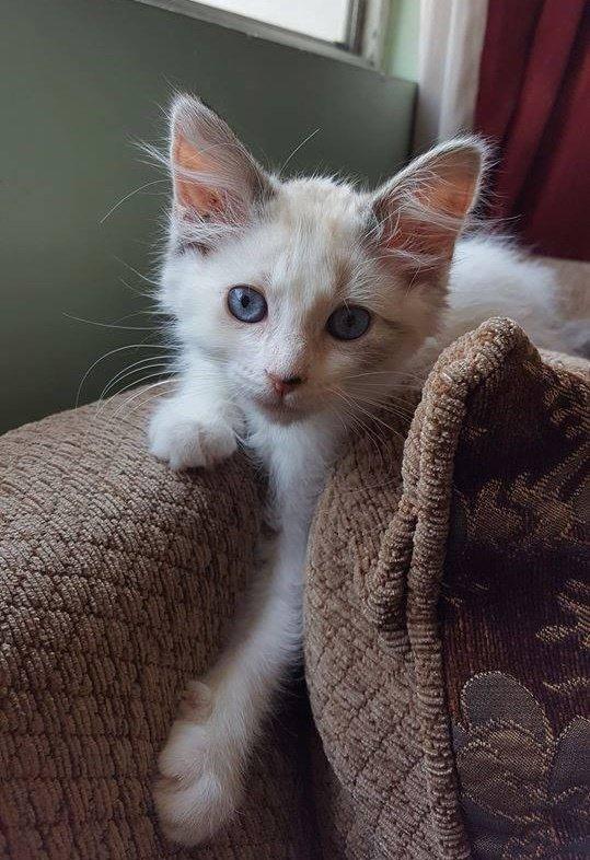 котенок рис 3
