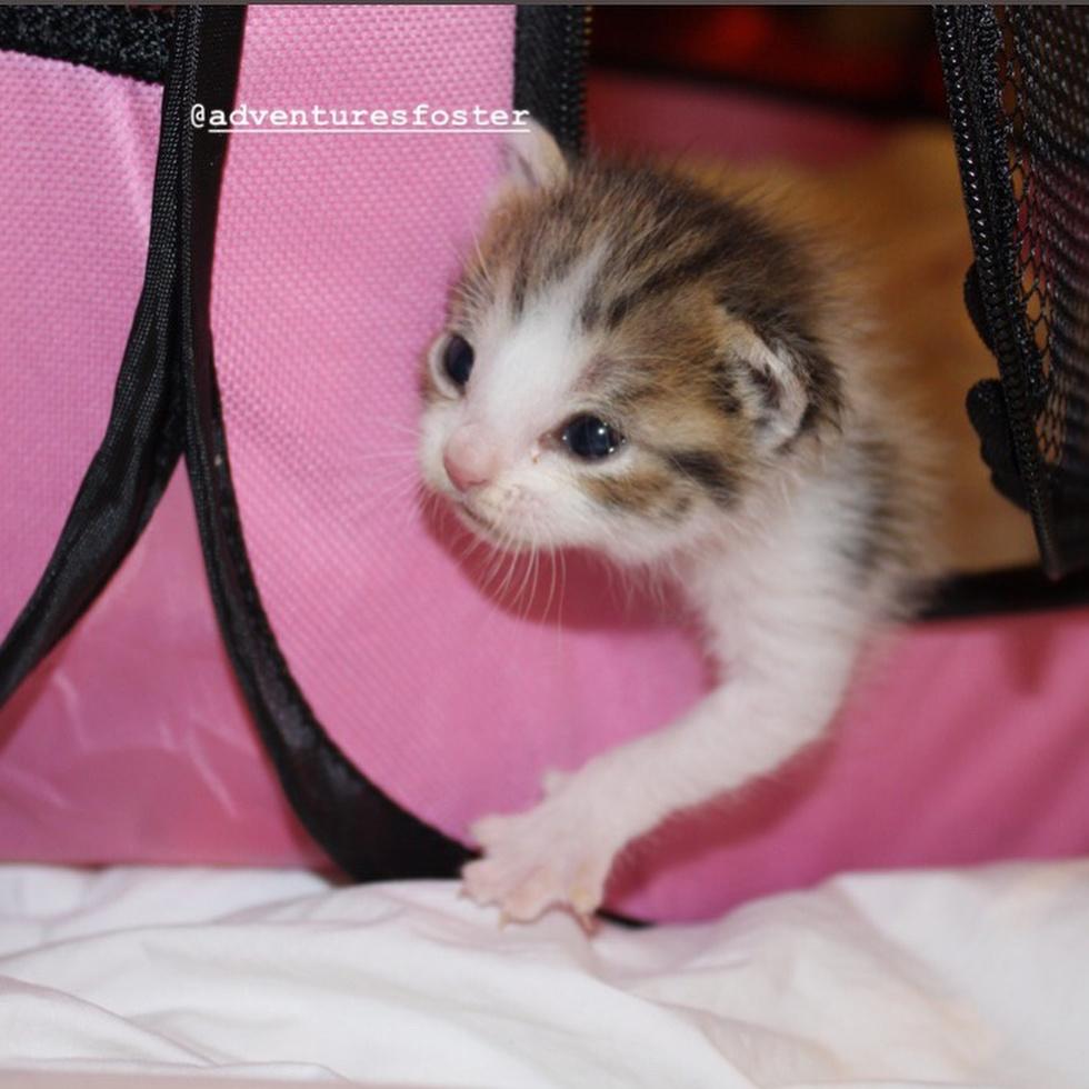 """""""Их уже положили на стол!"""" 11-летняя девочка спасла жизнь новорожденным котятам) рис 4"""