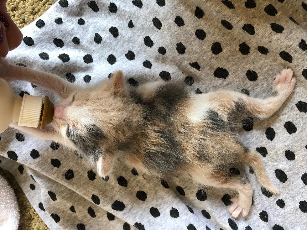 котенок рис 6