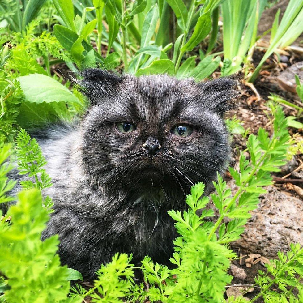 котенок рис 5