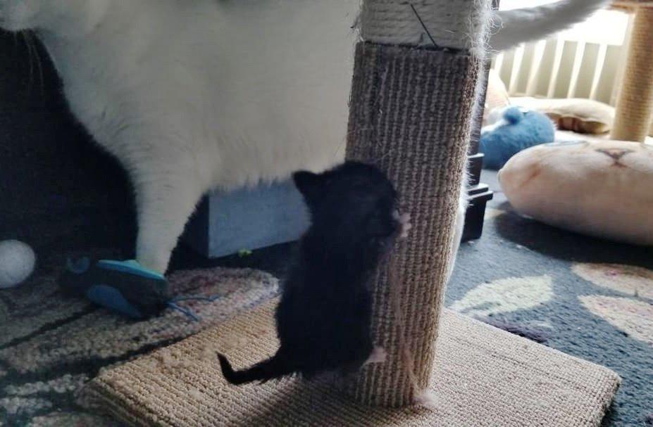 """""""Он размером с кекс!"""" История о котёнке с мордочкой-бантиком, который не растёт рис 5"""