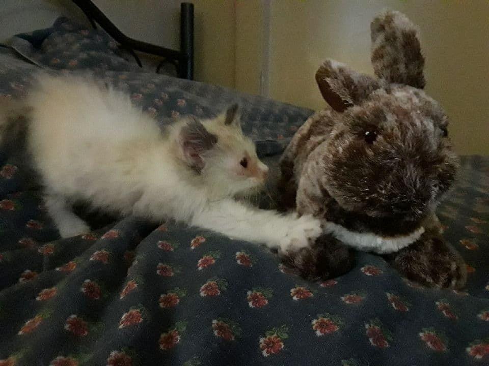 котенок и кролик рис 2