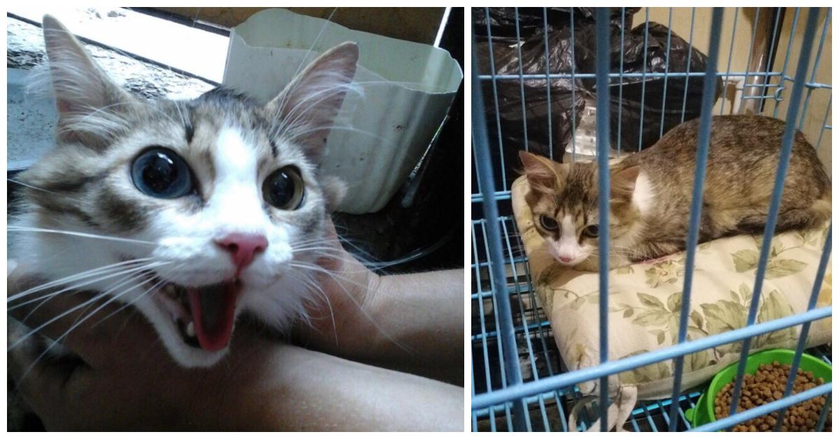 """""""У неё глаза разные, а сама - ласкуша..."""" В Оренбурге нашли кошку... запечатанную в пакет!"""