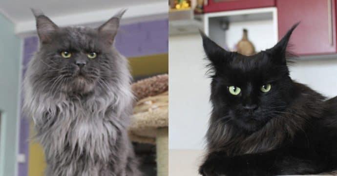 """Родители """"кошки с человеческим лицом"""""""