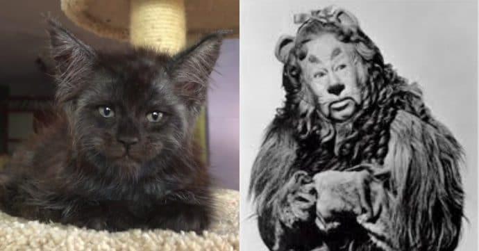 Кот с человеческим лицом и Трусливый лев
