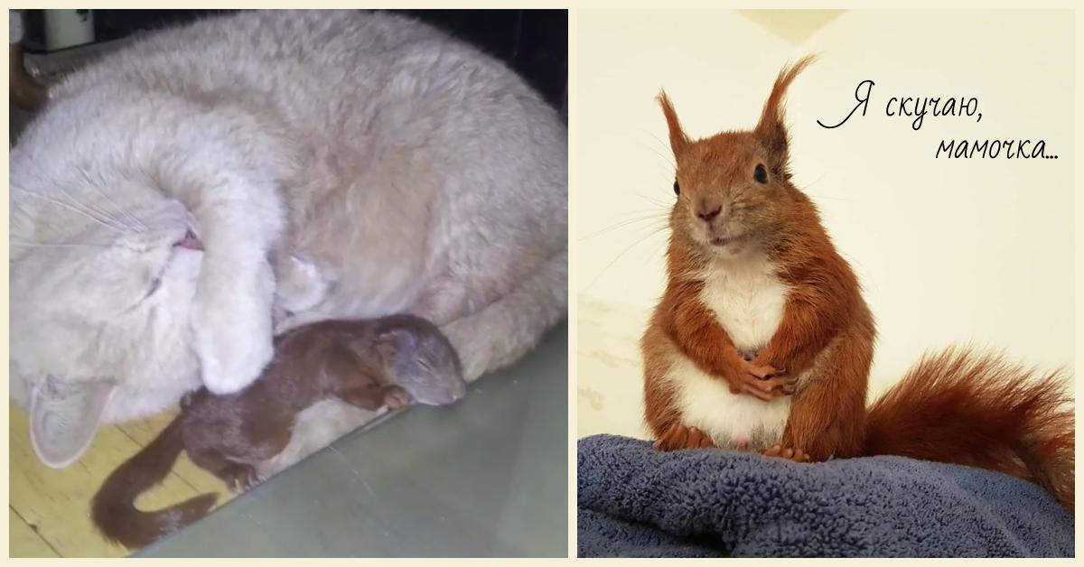 Кошка нежно прижимала к себе раненого бельчонка... История 3-х усатых друзей, полная счастливой любви! рис 7