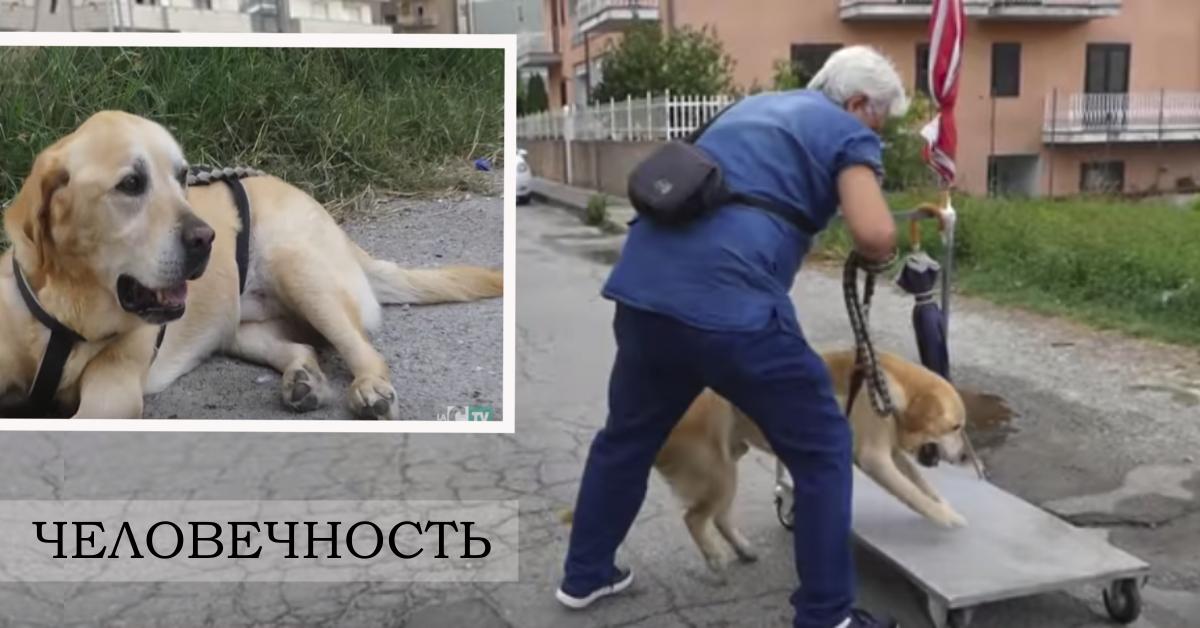 Человечность! Мужчина катает старую собаку на тележке, помогая ей просто жить... рис 6