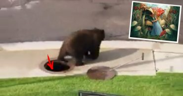 медведь в люке