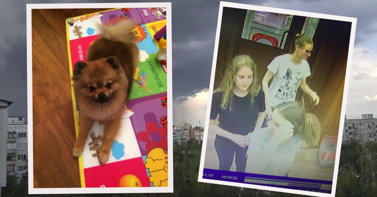 """""""Шпица украли... девочки!"""" С помощью видеокамеры в Пензе нашли преступниц и очень голодную собаку... рис 7"""