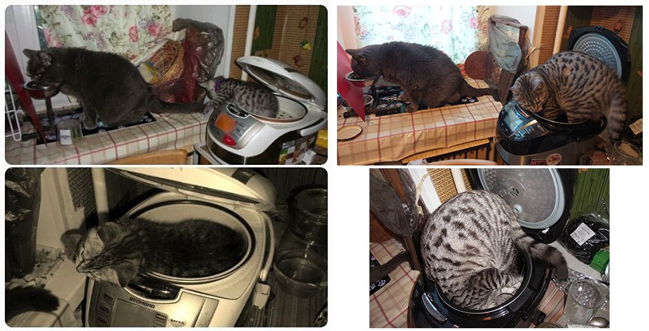 коты рис 2