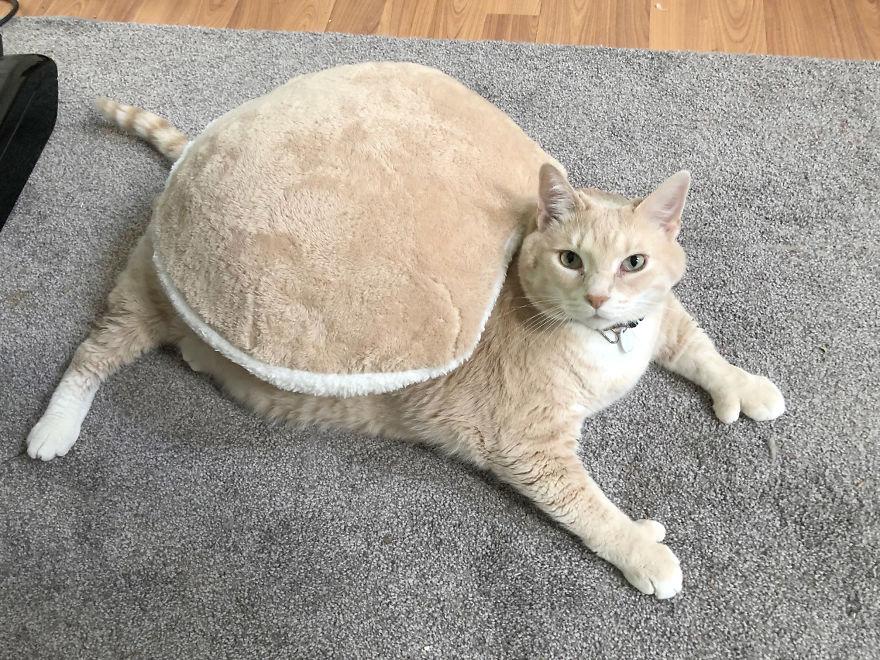 Картинки толстый котенок