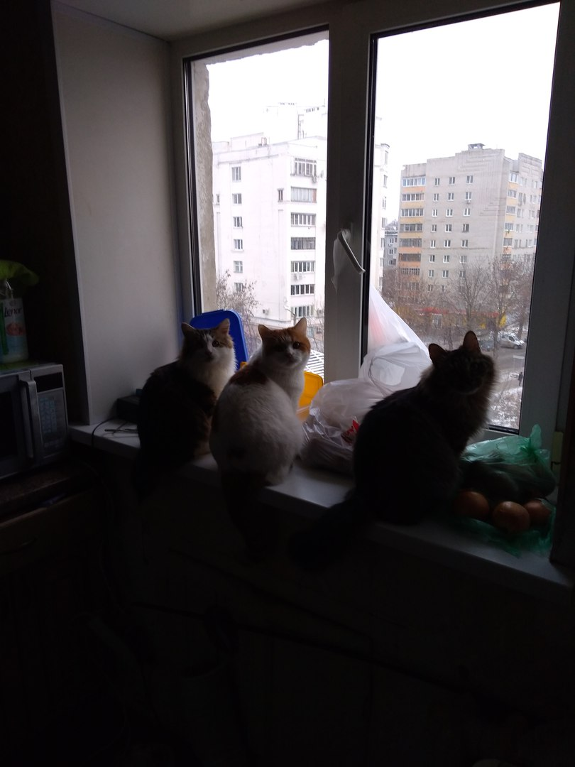 коты рис 4