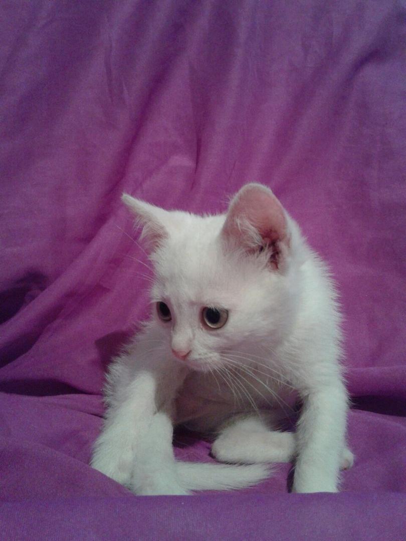 котенок рис 4
