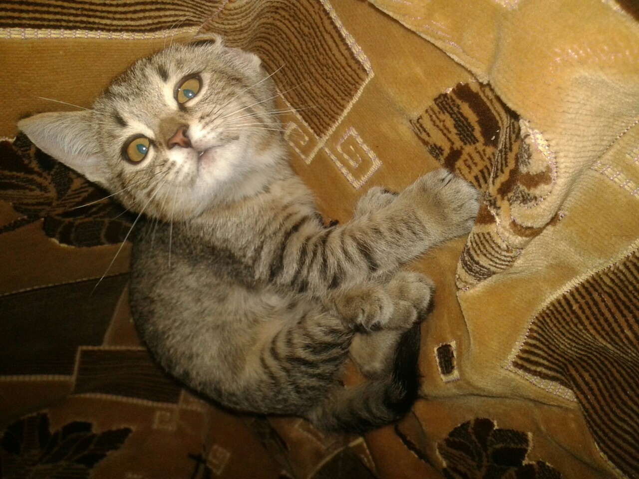 кошка рис 5