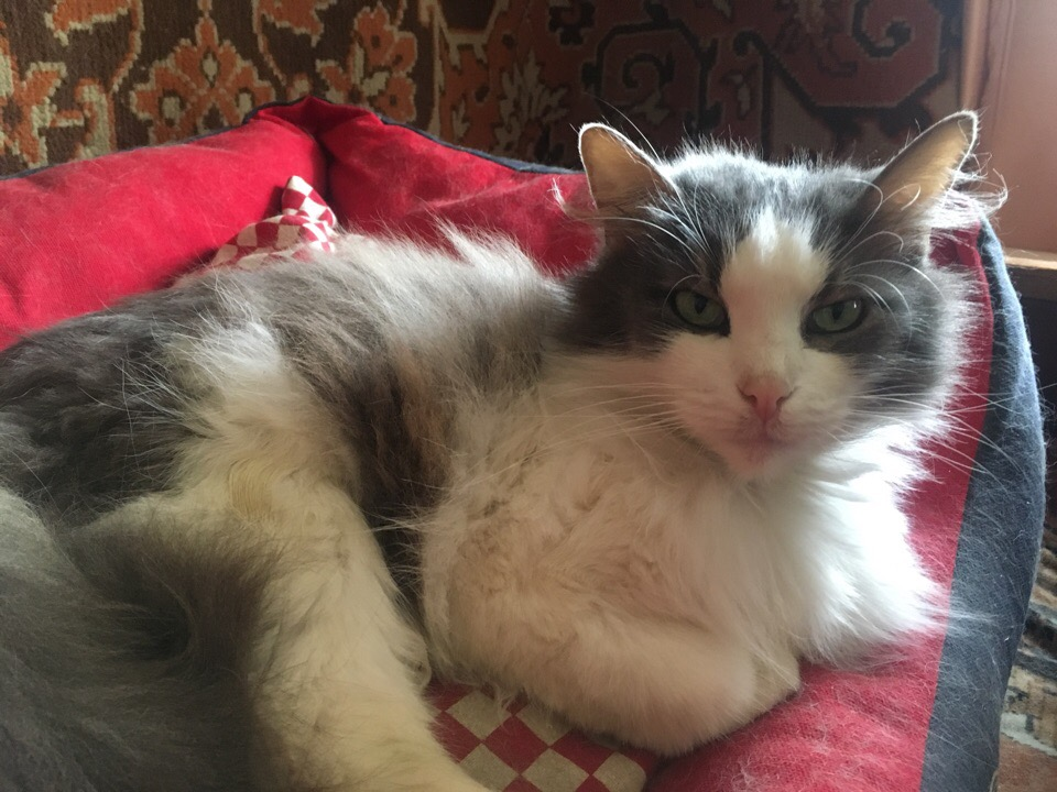 кошка рис 4