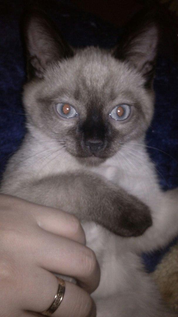 кошка рис 3