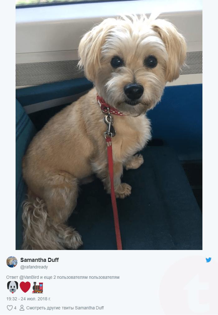 собака в транспорте рис 2