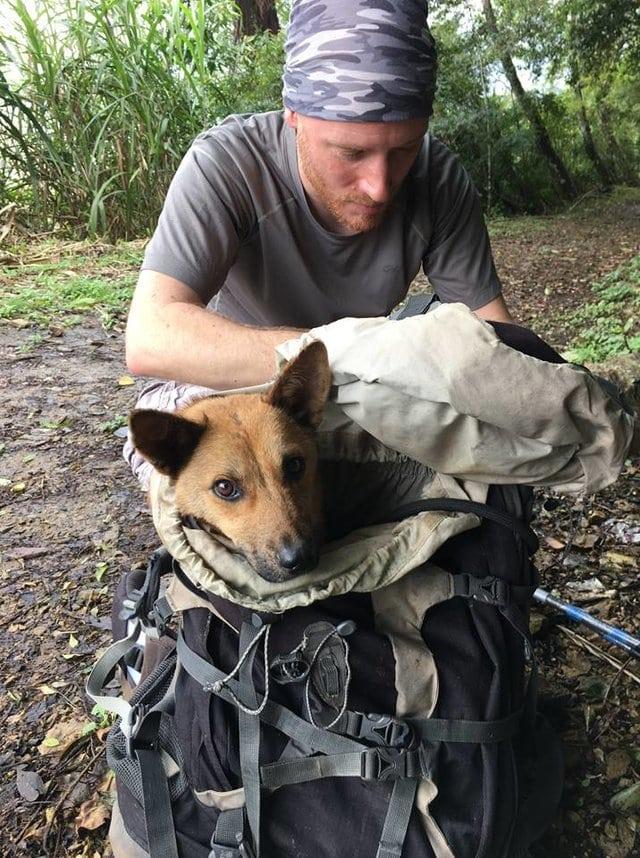 """""""Пёс не знал, что жизнь бывает доброй!"""" Чтобы спасти его, парень пошёл в непроходимые горы... рис 4"""