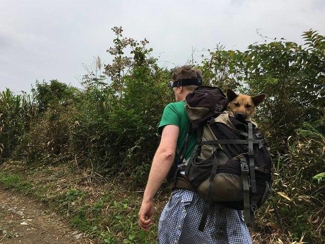 """""""Пёс не знал, что жизнь бывает доброй!"""" Чтобы спасти его, парень пошёл в непроходимые горы... рис 5"""
