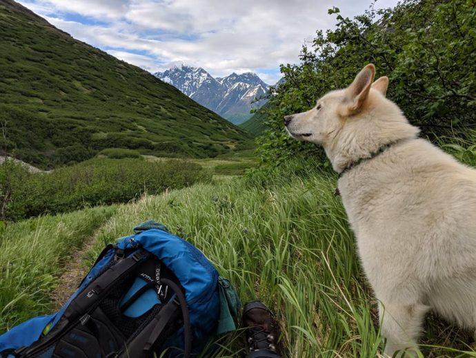 Хаски дважды спас глухую девушку, упавшую в реку на Аляске! Умный пёс, одно восхищение...) рис 4