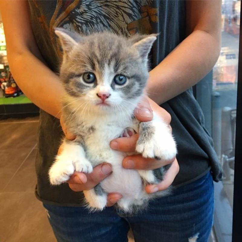 котенок на руках рис 2