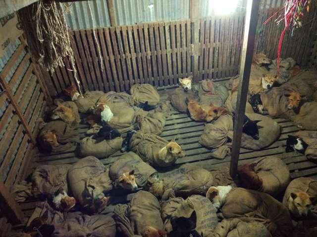 собаки в мешках