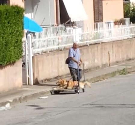 Человечность! Мужчина катает старую собаку на тележке, помогая ей просто жить...