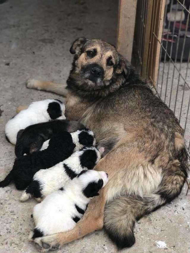 """""""Она мечтала их накормить!"""" Собака бродила по улицам с едой во рту, разыскивая потерянных щенков... рис 7"""