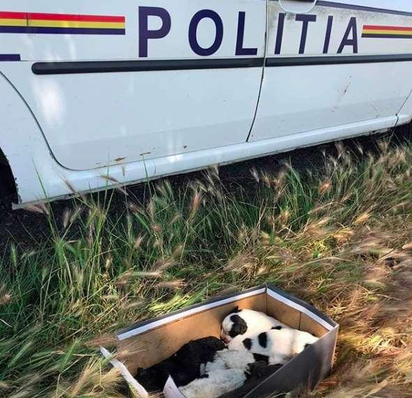 """""""Она мечтала их накормить!"""" Собака бродила по улицам с едой во рту, разыскивая потерянных щенков... рис 2"""