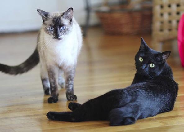 белый и черный коты на полу