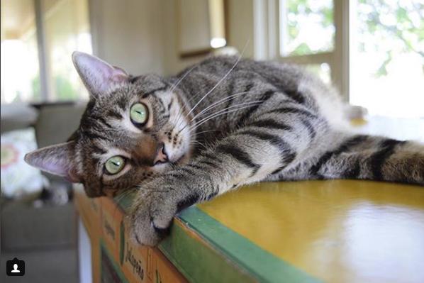 полосатый кот на столе