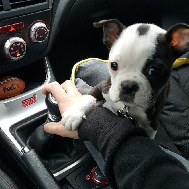 забавные пес в машине