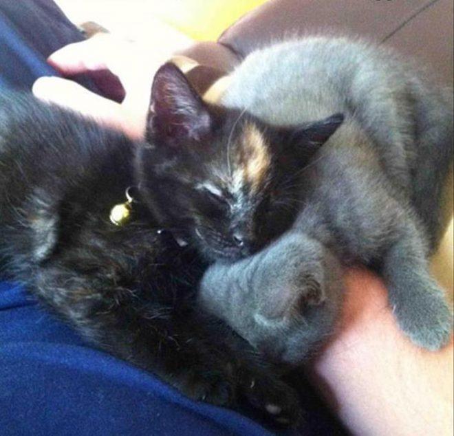 два котенка спят