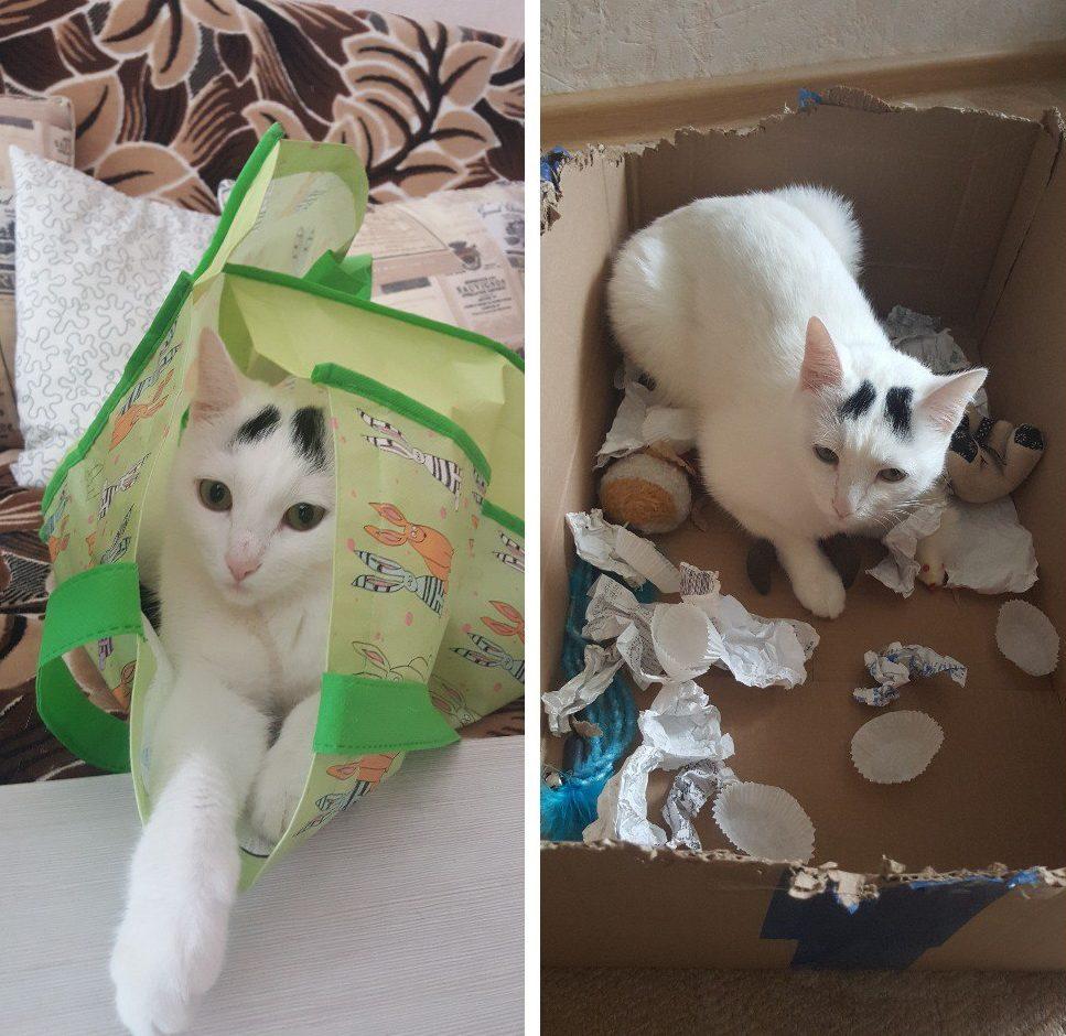 белая кошка в пакете, порвала бумагу