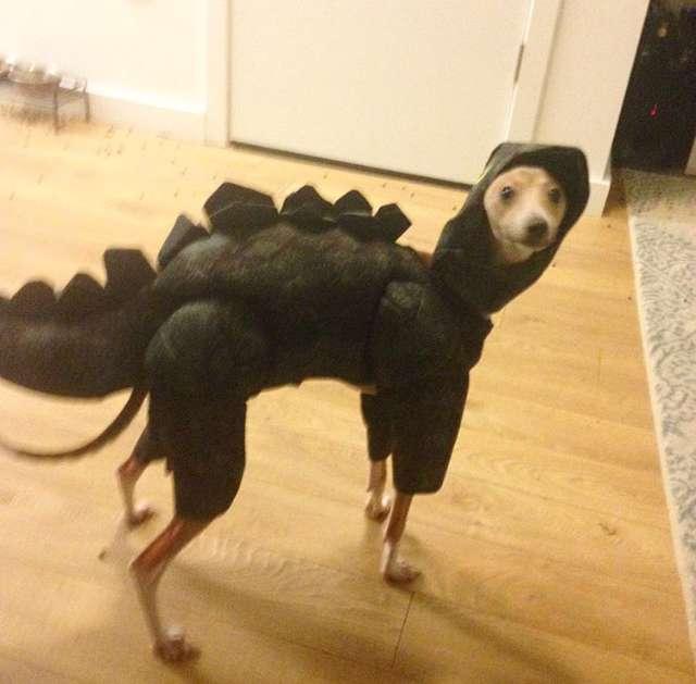собака в костюме динозавра