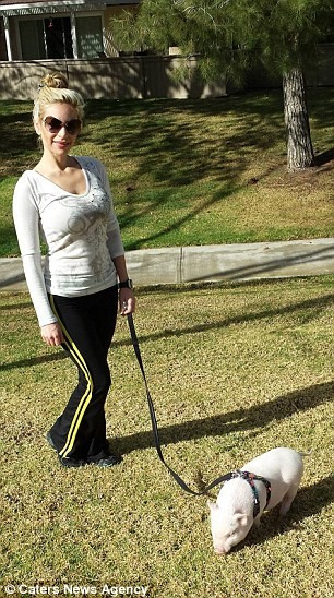 девушка выгуливает мини-пига